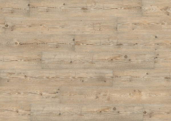 Wineo 1000 Wodd zum Klicken Ascona Pine Nature PLC052R